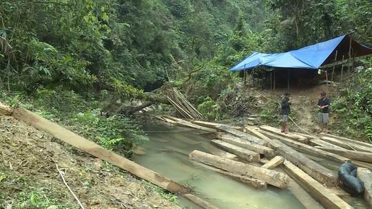 Phát hiện vụ xẻ thịt rừng phòng hộ lớn nhất tỉnh Quảng Bình - Ảnh 7.