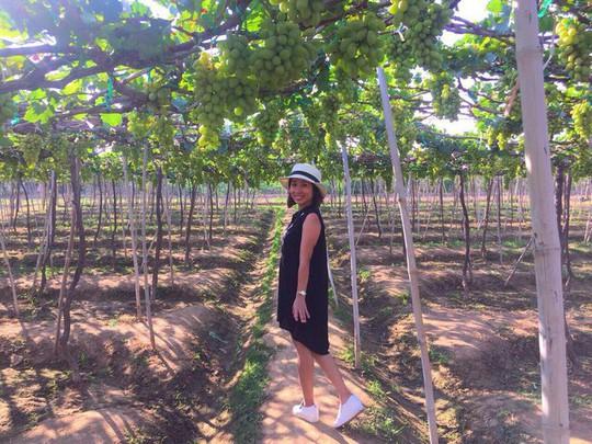 Về Ninh Thuận thỏa thích hái nho đầy túi, lại săn ảnh đẹp - Ảnh 4.