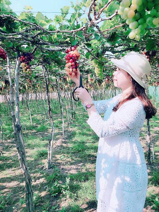 Về Ninh Thuận thỏa thích hái nho đầy túi, lại săn ảnh đẹp - Ảnh 5.