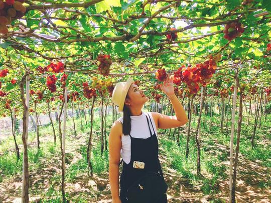 Về Ninh Thuận thỏa thích hái nho đầy túi, lại săn ảnh đẹp - Ảnh 7.