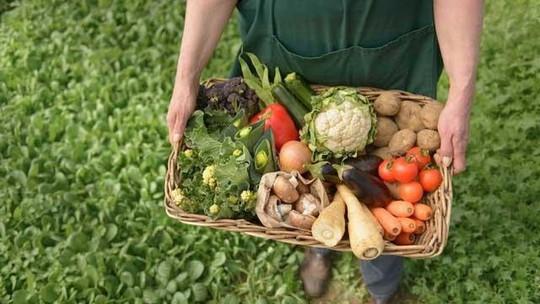 Thiên đường nông nghiệp hữu cơ - Ảnh 1.
