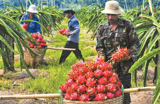 Những lưu ý mới nhất khi xuất khẩu trái cây sang Trung Quốc - Ảnh 1.