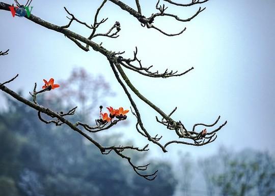 Đẹp nao lòng mùa hoa gạo tháng Ba - Ảnh 11.