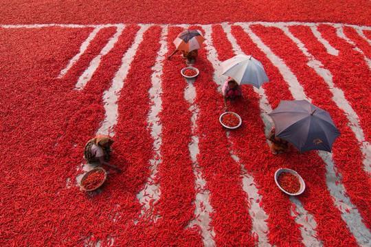 Bốn bức ảnh Việt Nam vào top đẹp nhất thế giới - Ảnh 7.