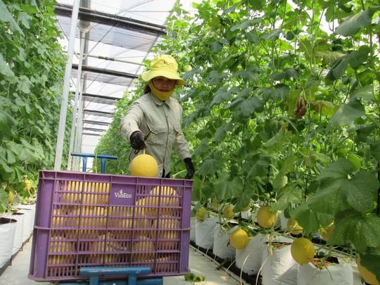 Đổ vốn lớn vào nông nghiệp - Ảnh 1.