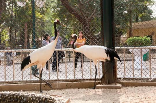 Ngắm loài chim cực quý, nằm trong sách đỏ thế giới - Ảnh 1.