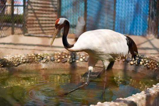 Ngắm loài chim cực quý, nằm trong sách đỏ thế giới - Ảnh 2.