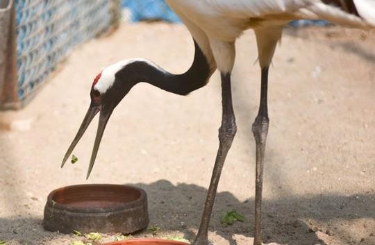 Ngắm loài chim cực quý, nằm trong sách đỏ thế giới - Ảnh 3.