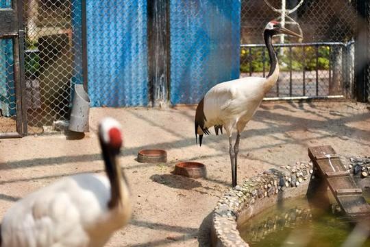 Ngắm loài chim cực quý, nằm trong sách đỏ thế giới - Ảnh 8.