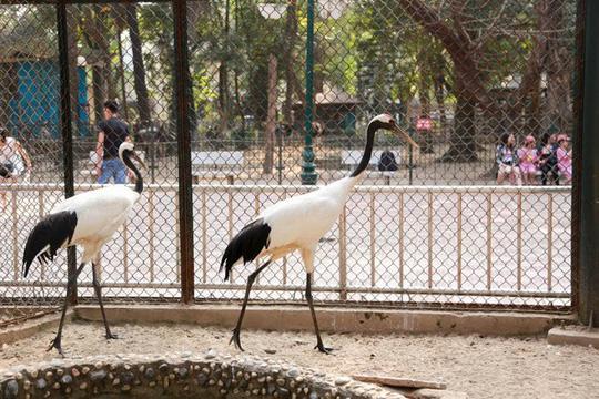 Ngắm loài chim cực quý, nằm trong sách đỏ thế giới - Ảnh 10.