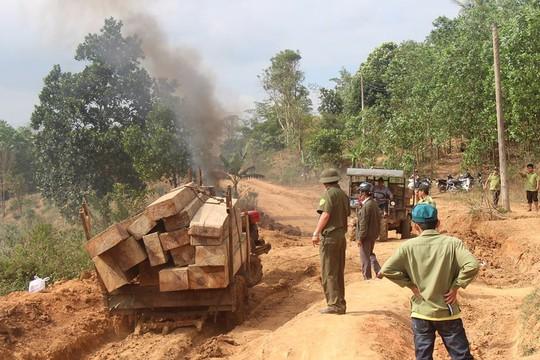 Tạm giữ 5 đối tượng khai thác hơn 76 m3 gỗ trong rừng phòng hộ - Ảnh 1.