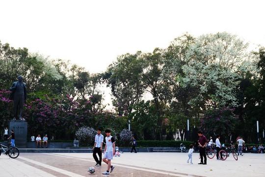 Mùa hoa sưa nở trắng trời Hà Nội - Ảnh 6.