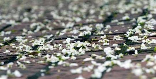 """""""Điểm danh"""" những mùa hoa tháng 3 đẹp mê hồn - Ảnh 10."""