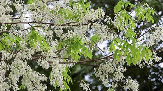 """""""Điểm danh"""" những mùa hoa tháng 3 đẹp mê hồn - Ảnh 3."""