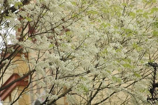 """""""Điểm danh"""" những mùa hoa tháng 3 đẹp mê hồn - Ảnh 7."""