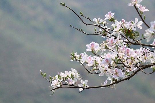 """""""Điểm danh"""" những mùa hoa tháng 3 đẹp mê hồn - Ảnh 12."""