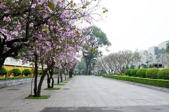 """""""Điểm danh"""" những mùa hoa tháng 3 đẹp mê hồn - Ảnh 13."""