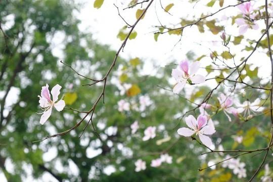 """""""Điểm danh"""" những mùa hoa tháng 3 đẹp mê hồn - Ảnh 16."""