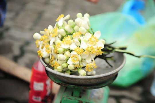 """""""Điểm danh"""" những mùa hoa tháng 3 đẹp mê hồn - Ảnh 21."""