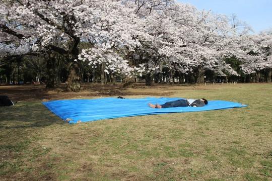 Những nguyên tắc cần biết khi đến Nhật Bản ngắm anh đào - Ảnh 5.
