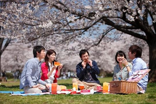 Những nguyên tắc cần biết khi đến Nhật Bản ngắm anh đào - Ảnh 6.
