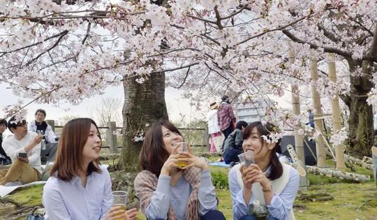 Những nguyên tắc cần biết khi đến Nhật Bản ngắm anh đào - Ảnh 7.
