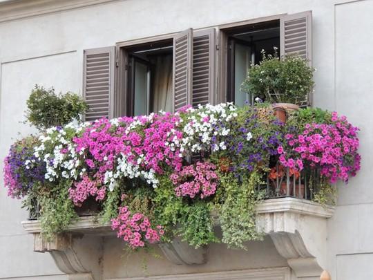 Mê mẩn những ban công đầy hoa dại tuyệt đẹp - Ảnh 10.