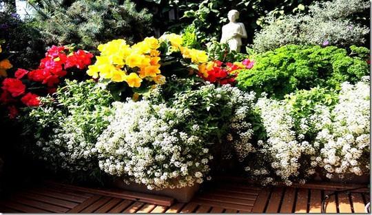Mê mẩn những ban công đầy hoa dại tuyệt đẹp - Ảnh 2.