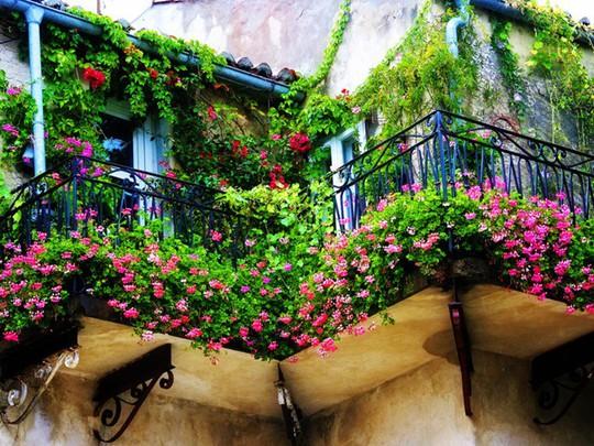 Mê mẩn những ban công đầy hoa dại tuyệt đẹp - Ảnh 4.