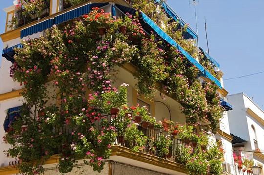 Mê mẩn những ban công đầy hoa dại tuyệt đẹp - Ảnh 8.