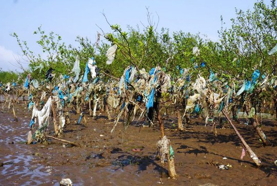 Kinh hoàng cánh rừng rác khổng lồ ven bờ biển ở Thanh Hóa - Ảnh 1.