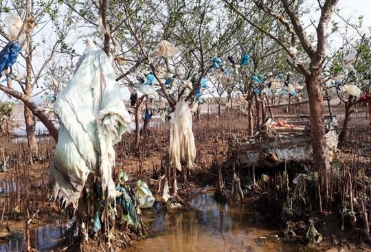 Kinh hoàng cánh rừng rác khổng lồ ven bờ biển ở Thanh Hóa - Ảnh 5.