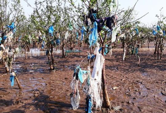 Kinh hoàng cánh rừng rác khổng lồ ven bờ biển ở Thanh Hóa - Ảnh 4.