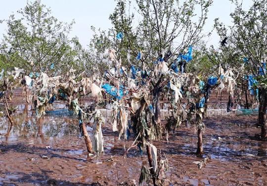 Kinh hoàng cánh rừng rác khổng lồ ven bờ biển ở Thanh Hóa - Ảnh 3.