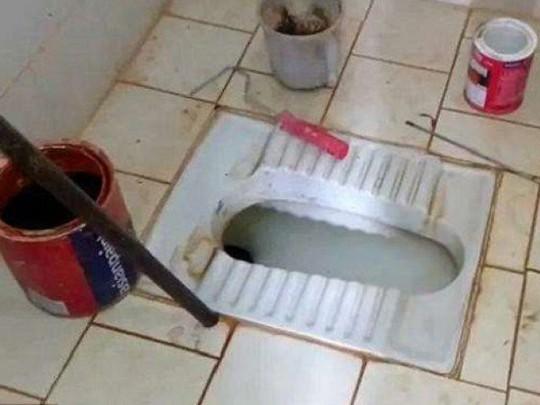 Phát hiện kinh hoàng trong bồn cầu nhà vệ sinh - ảnh 1