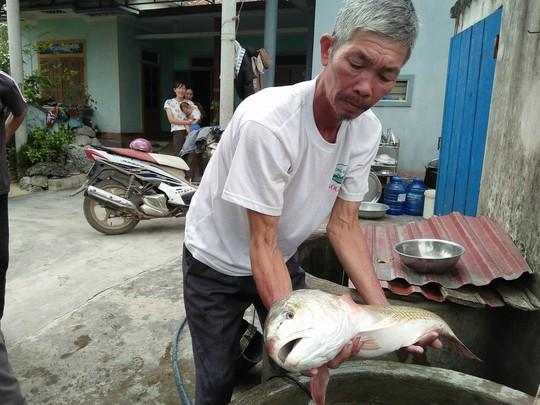 Ngư dân bắt được cá lạ, nghi cá sủ vàng tiền tỉ