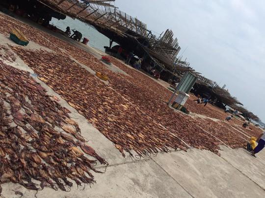 Giá cao ngất ngưởng, tàu câu mực Quảng Nam hốt bạc tỉ - Ảnh 2.