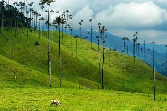 Vịnh Hạ Long, Mù Cang Chải là những địa điểm có cảnh đẹp nhất Trái đất - Ảnh 14.