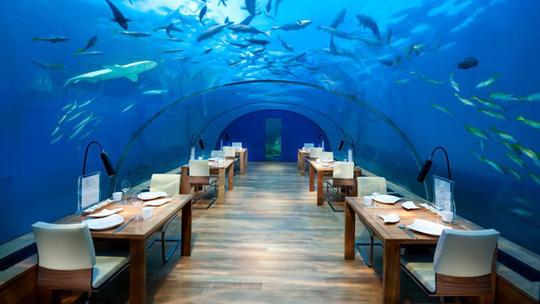 Khách sạn dưới biển đầu tiên trên thế giới - Ảnh 6.