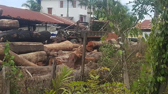 Vụ Phượng râu: Gia đình Chi cục trưởng Kiểm lâm Đắk Lắk giao nộp 8 m3 gỗ - Ảnh 1.