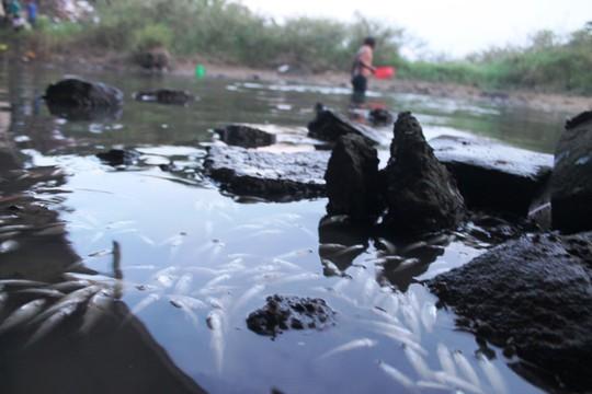 Không tìm ra thủ phạm chính vụ cá chết trắng sông Bàu Giang - Ảnh 1.