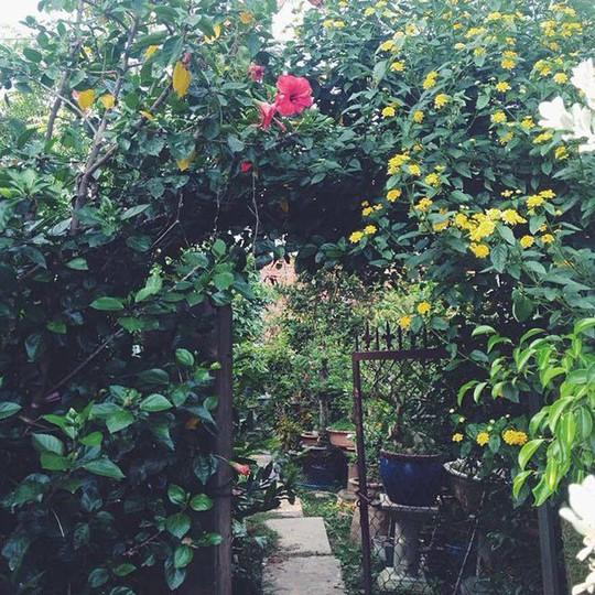 Tăng Thanh Hà khoe khu vườn bình yên trĩu quả - Ảnh 1.