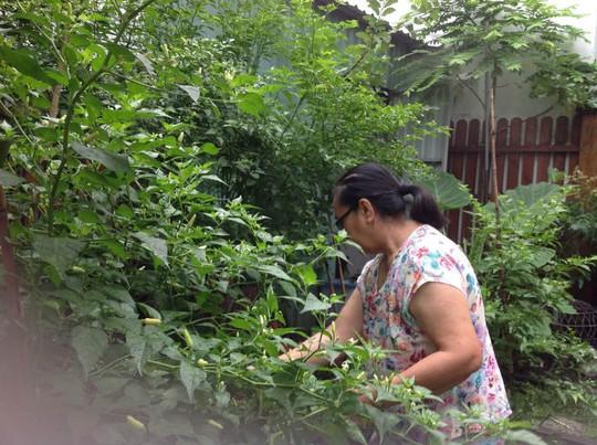 Tăng Thanh Hà khoe khu vườn bình yên trĩu quả - Ảnh 3.