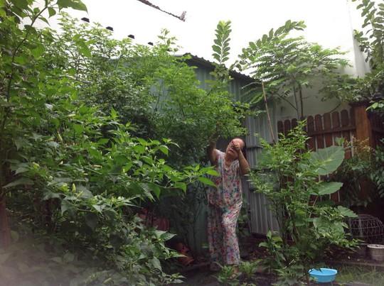 Tăng Thanh Hà khoe khu vườn bình yên trĩu quả - Ảnh 4.