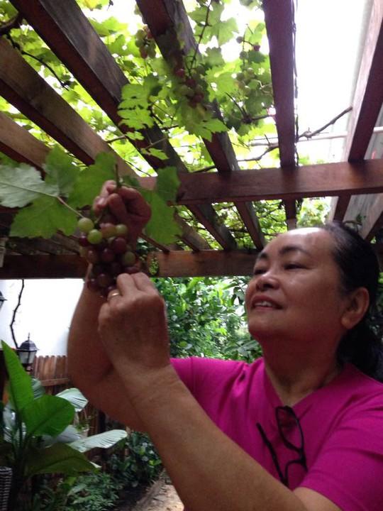 Tăng Thanh Hà khoe khu vườn bình yên trĩu quả - Ảnh 5.