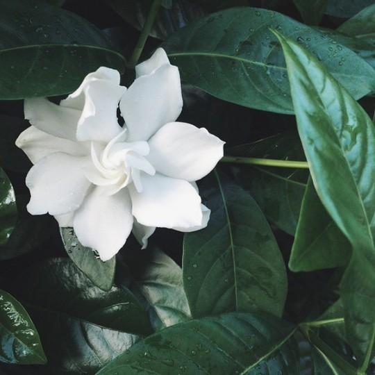 Tăng Thanh Hà khoe khu vườn bình yên trĩu quả - Ảnh 10.