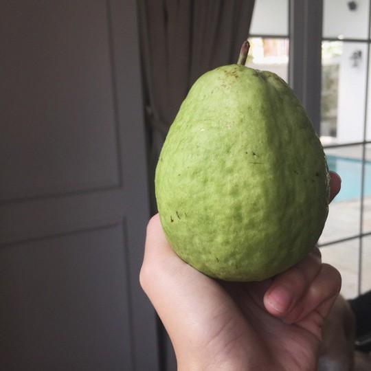 Tăng Thanh Hà khoe khu vườn bình yên trĩu quả - Ảnh 14.