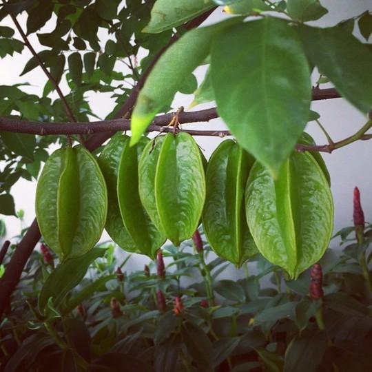 Tăng Thanh Hà khoe khu vườn bình yên trĩu quả - Ảnh 12.