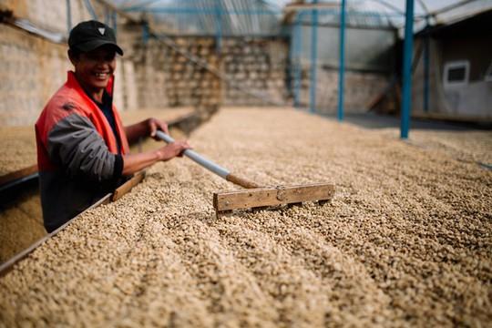 Thị trường cà phê Việt nằm trong tay ai? - Ảnh 1.