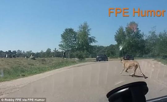 Ra khỏi xe chụp ảnh, cả gia đình bị báo đốm đuổi suýt chết - Ảnh 2.